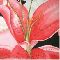 Pink Lilly Abstract