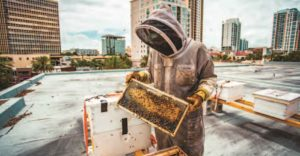 st. pete bees create quite a buzz