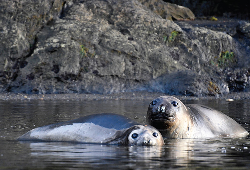Linda Welsh's photo of baby elephant seals in Patagonia