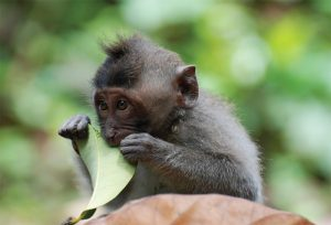 Linda's photo of a monkey at the Monkey Temple in Bali